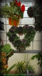 Succulent heart topiary