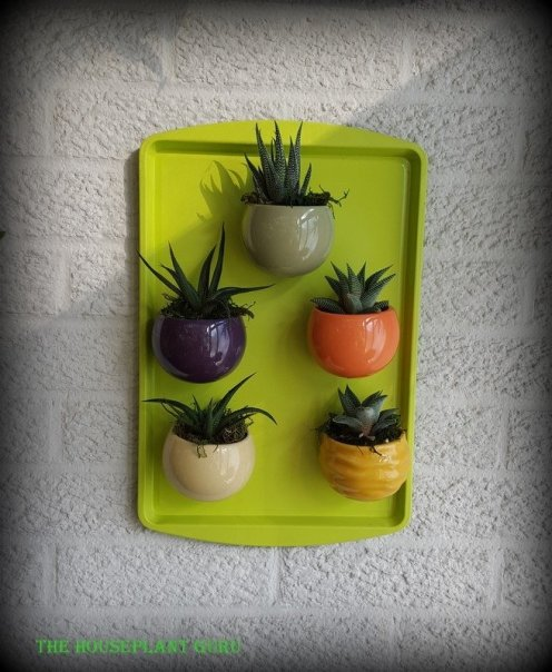 Living Trends plant magnets