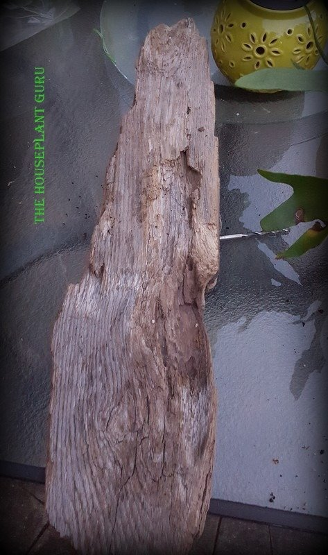 A piece of driftwood from Lake Michigan