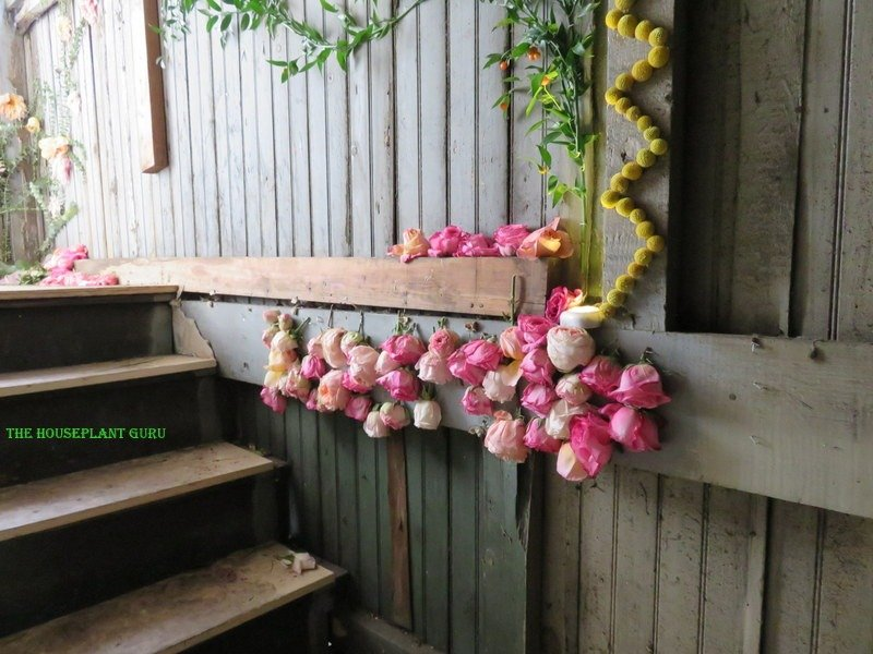 Love the zig zag globe yellow flowers going up the back stairway