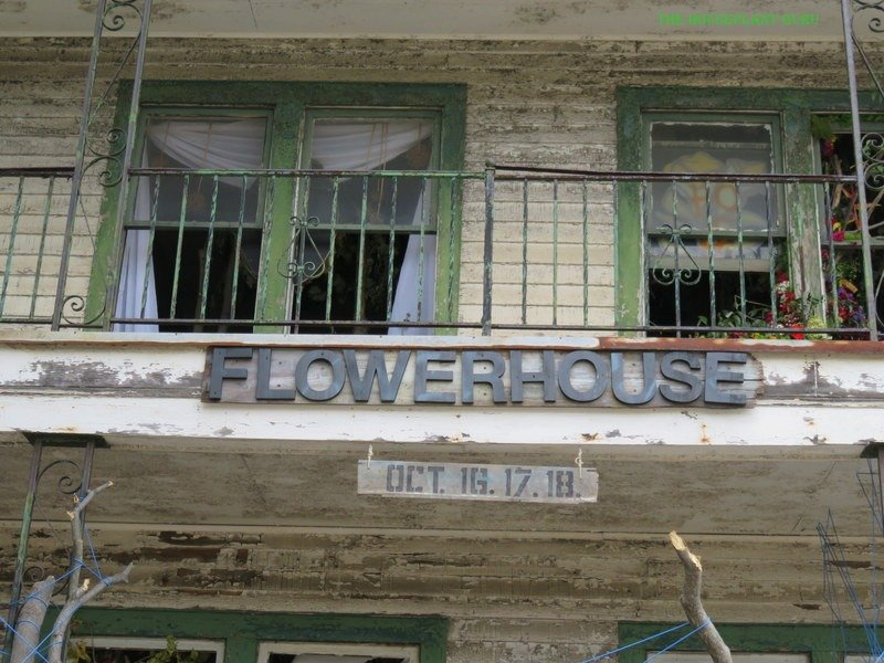 Flower House Detroit Photos