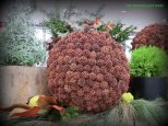 Sweet gum ball sphere