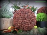 Sweet gum ball sphere