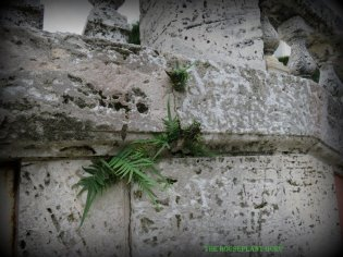 Love those little ferns in the wall