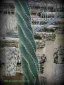 Twirling cactus