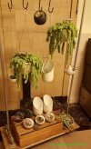 Hanging plants and air plants