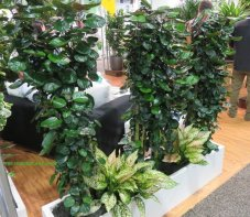 Balfour Aralia room divider with Aglaonema