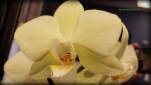 florida orchids 039