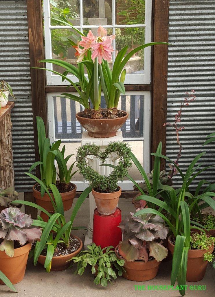The Gardener's Show House