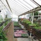 New plants growing on the dirt floors of Graye's