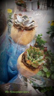 HGTV Home Plants Succulent Bouqulent