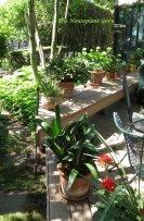 Houseplants on summer vacation