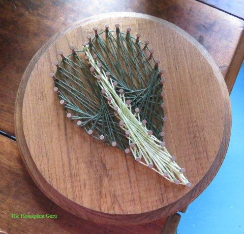 Philodendron 'Brazil' leaf