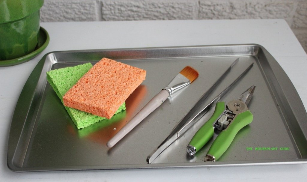 A tray of useful grooming tools