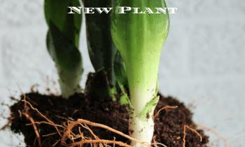 Planting it Better