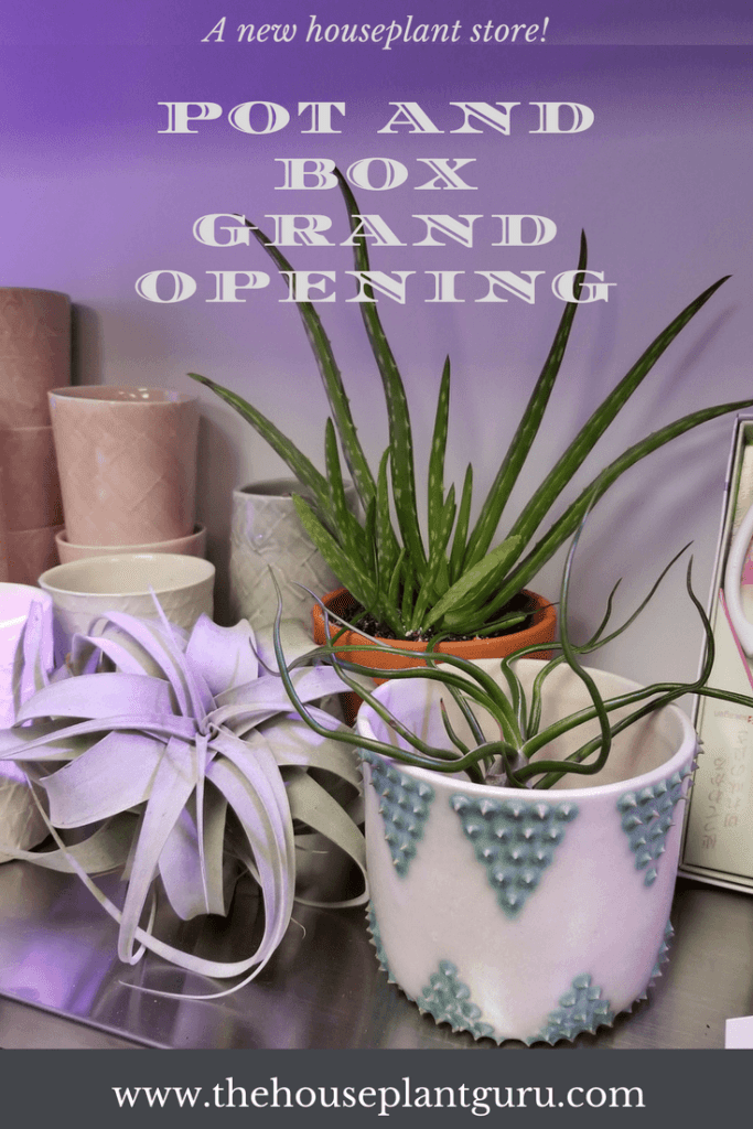 Pot and Box Grand Opening