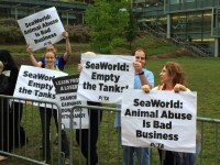 SeaWorld Partnership Faces Criticism, Protest