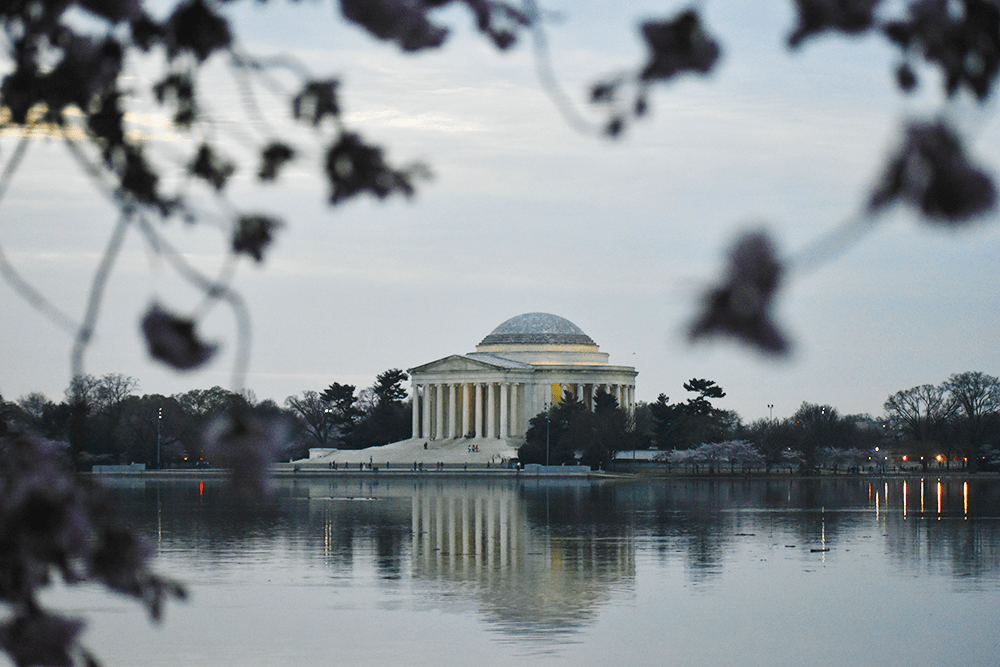 Campaign Searches for Tidal Basin Restoration Options