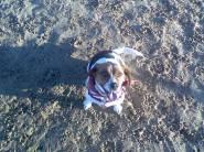 Chicago Dog Beach