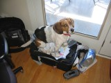 The protest of me packing luggage to travel