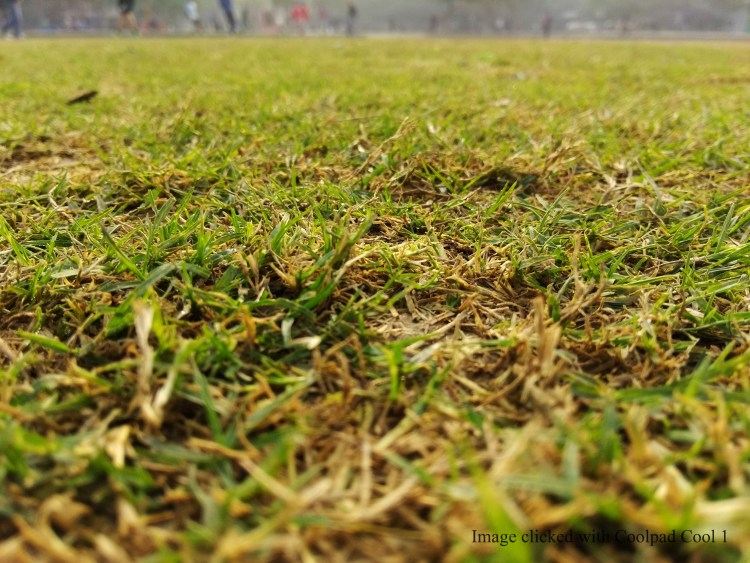 Grass in the morning_shot with Coolpad Cool1