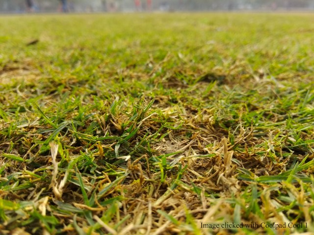 Grass_shift focus_shot with Coolpad Cool1