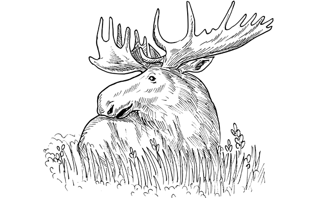 Moose Lottery Applications Now Being Accepted — The