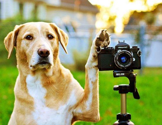 dog taking a photo