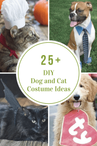 DIY Dog and Cat Costume Ideas