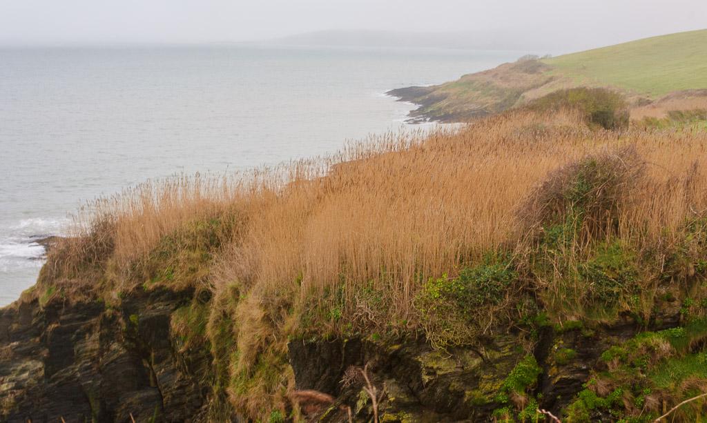headland in courtmacsherry Ireland