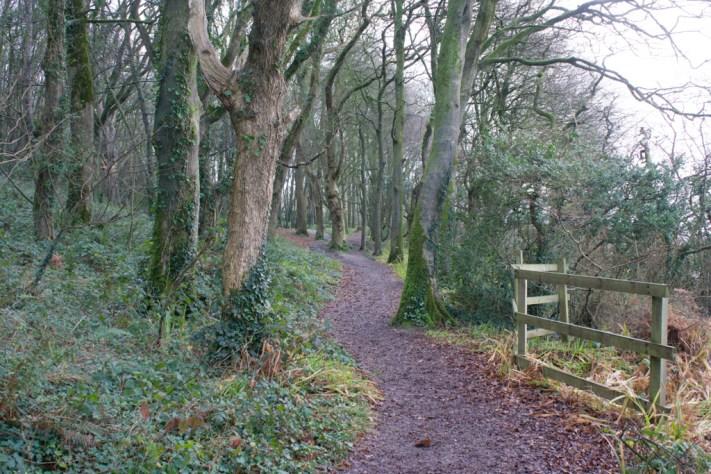 beech woods in courtmacsherry Ireland