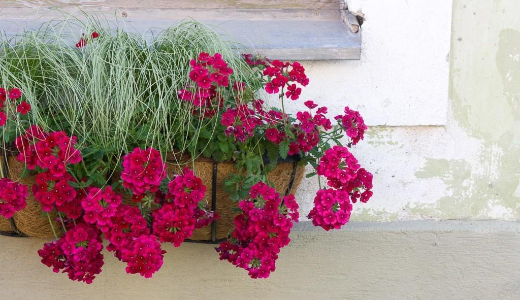 Flowers in Kuressaare Estonia