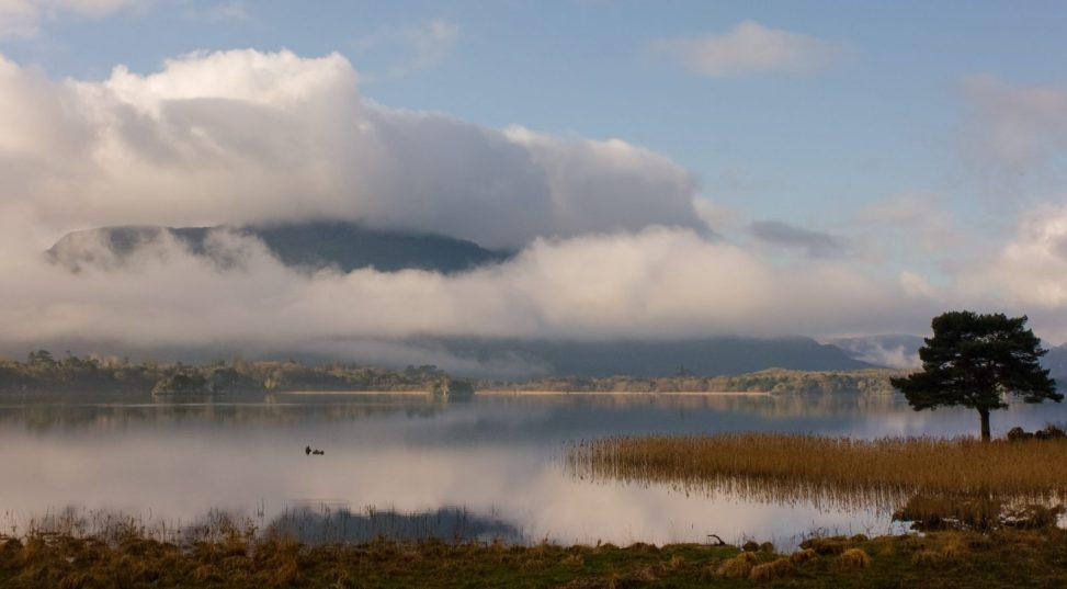 Killarney Lake Tree-1-2