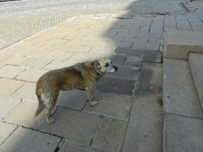 Dog on the sidewalk