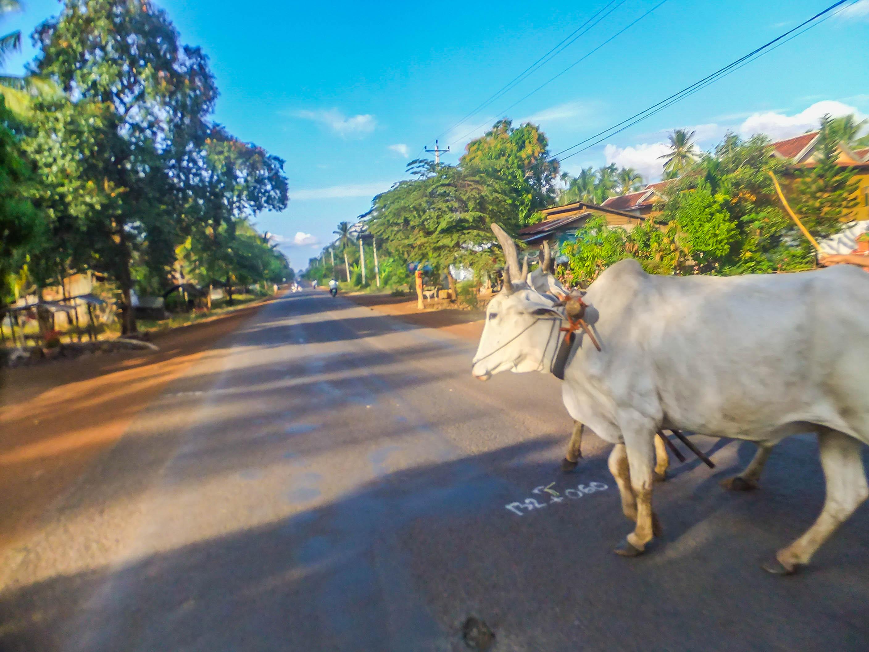 Sihanoukville to Phnom Penh