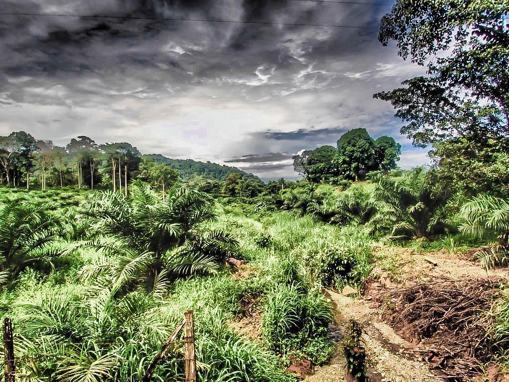 San Josecito, Costa Rica In The Oso Peninsula