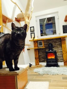 Lodge - Ings Luxury Cat Hotelthe Hotel