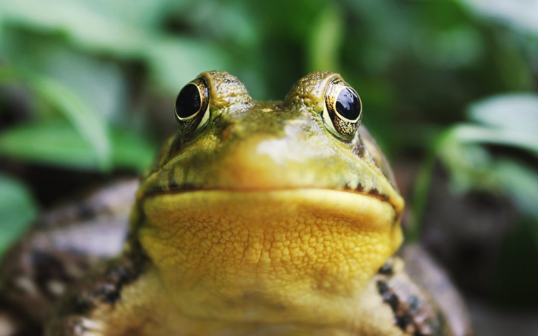 Bemused frog picture by jack hamilton on unsplash