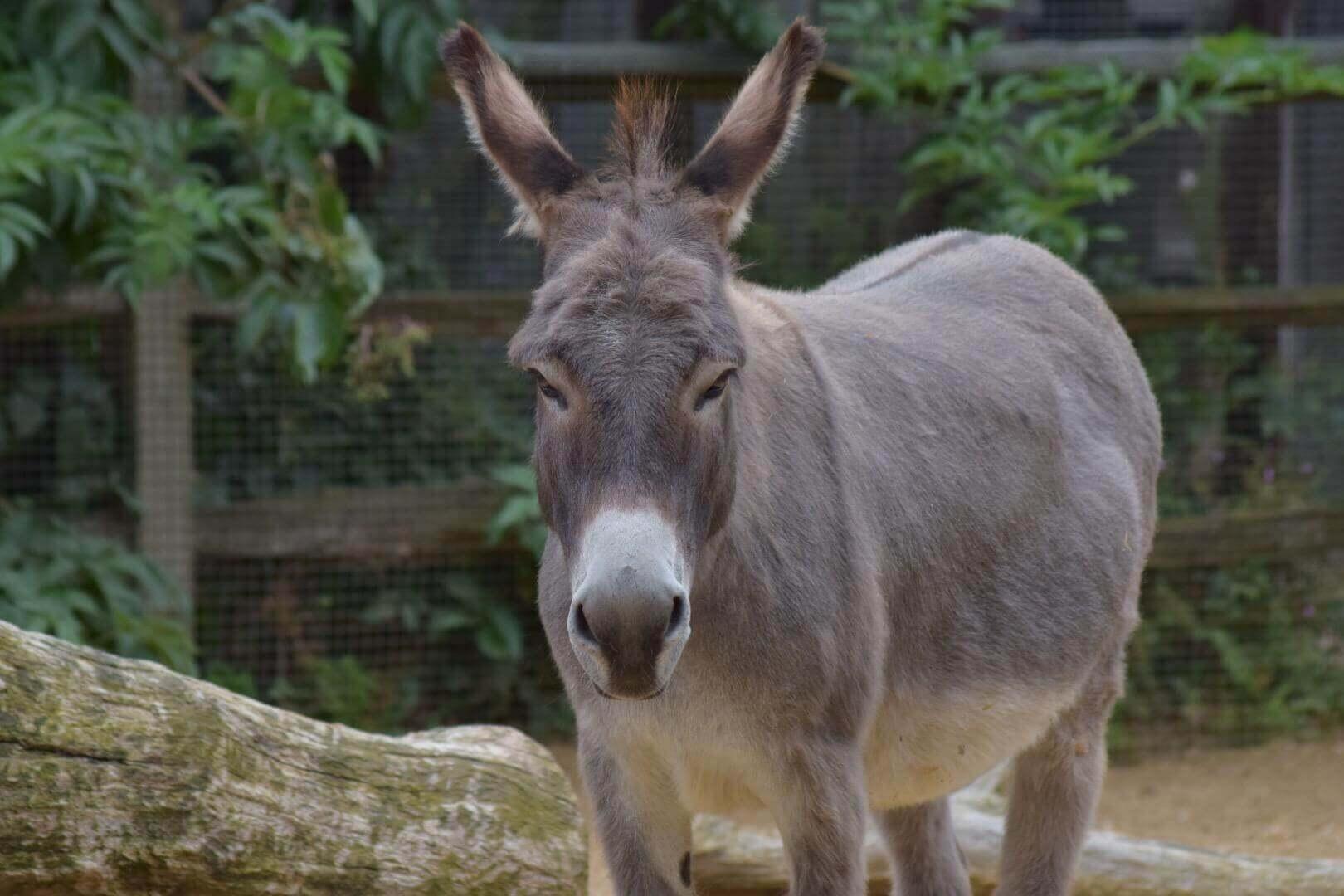 donkey fuck