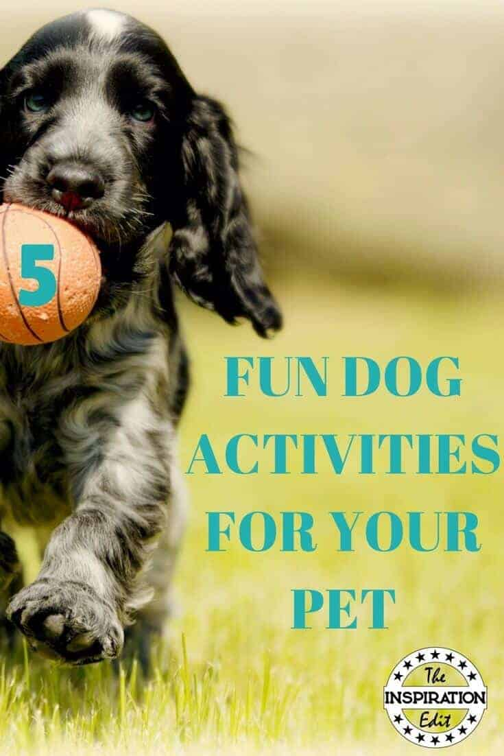 FUN ACTIVITIES FOR DOGS