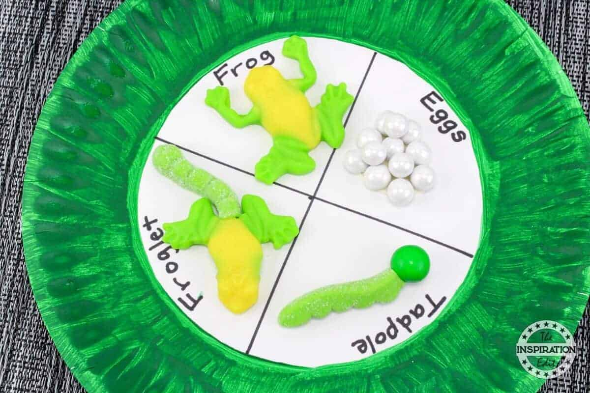 Frog Lifecycle Craft Activity For Kids The Inspiration Edit