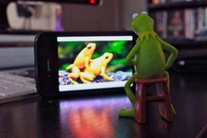 Kermit Porn