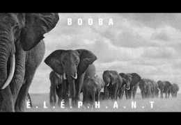 Booba – E.L.E.P.H.A.N.T (English lyrics)