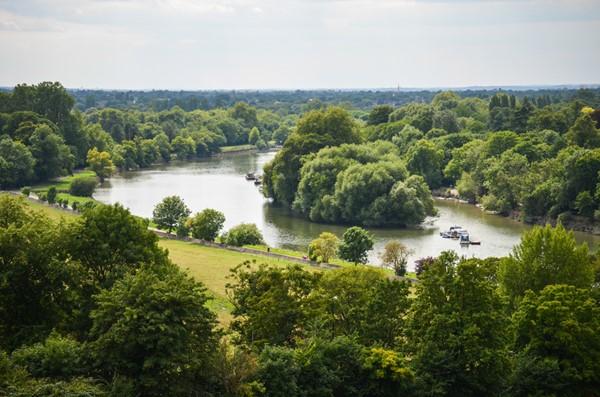 Fields of Richmond park in London