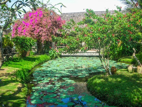 Tropical garden with lotus flowers