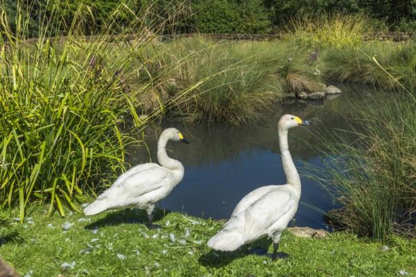 london wetlands center