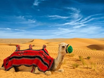 Desert Safari with Camel Ride