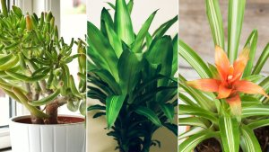 Purify Indoor Air With Natural Houseplants