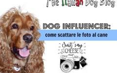 foto al cane