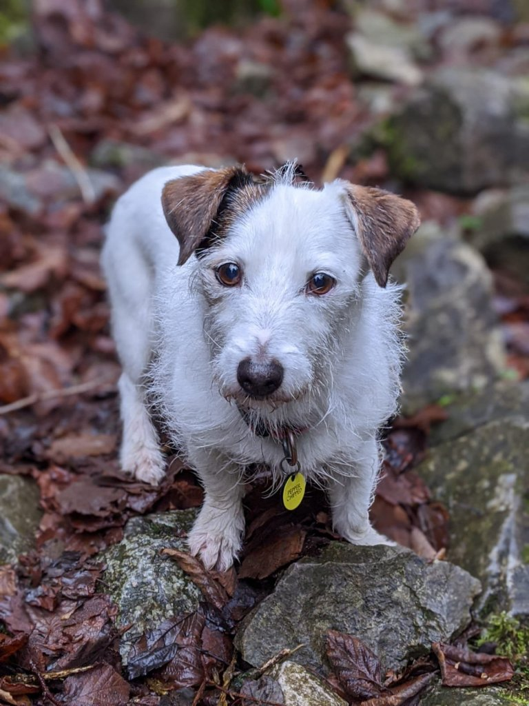 Looking after a Jack Russell – 10 genius things Jack Russell owners can't live without